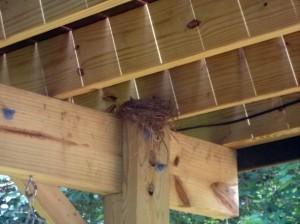 2 baby birds??