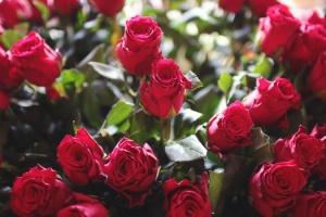 flourish-flower